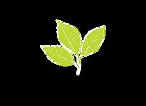 matchaful-logo.png