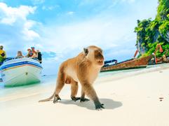 Monkey beach.png