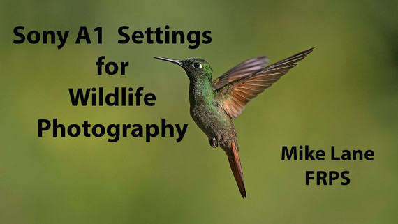 Sony A1 Settings for Wildlife Photography