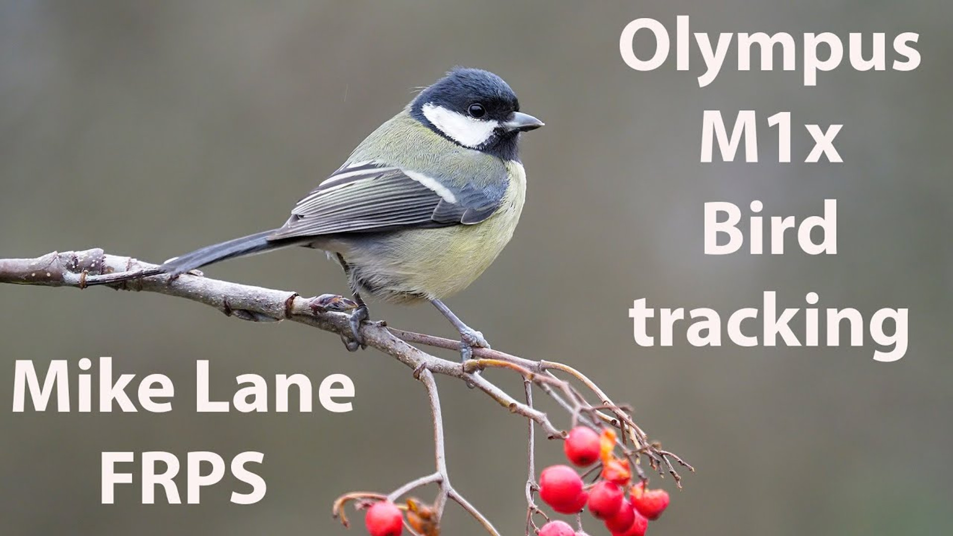 Olympus M1x Bird Tracking