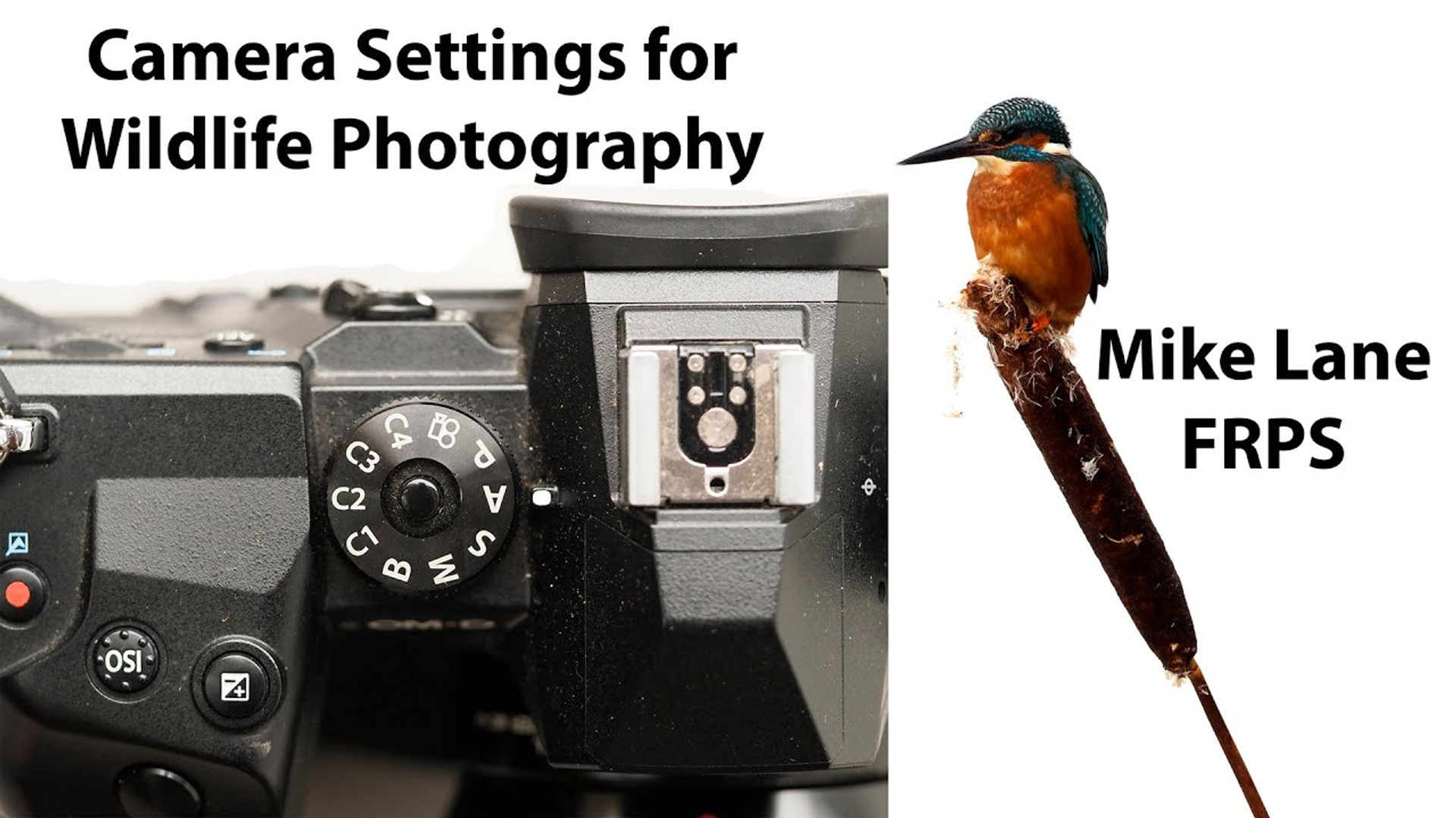 Camera Settings for Wildlife Photography
