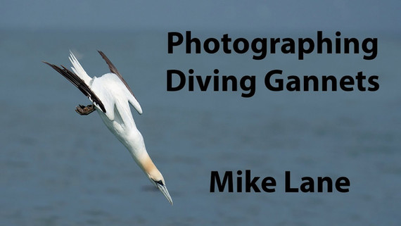 Photographing Diving Gannets