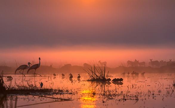 Wattled cranes and Black lechwe