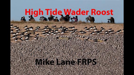 High Tide Wader Roost