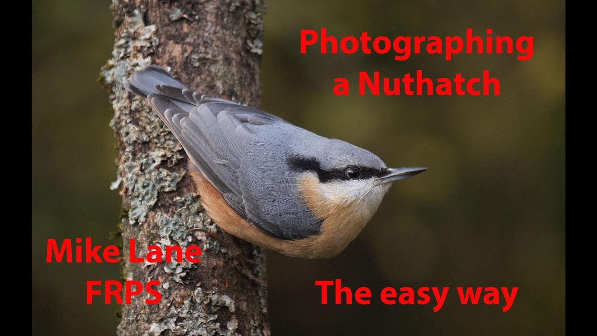 Photographing a Nuthatch