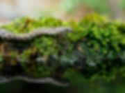 Dice snake K6018.jpg