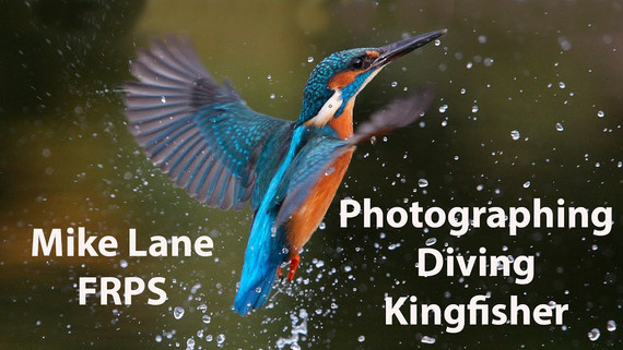 Bird Photography with the Sony A1 and the 200-600mm lens