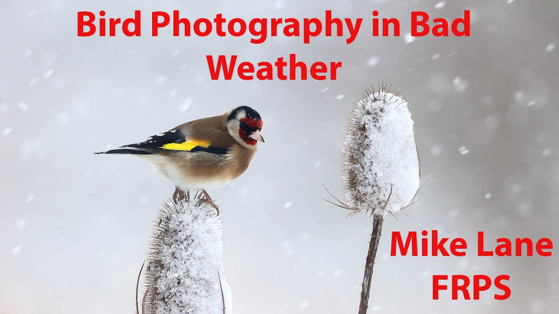 Bird Photography in Bad Weather