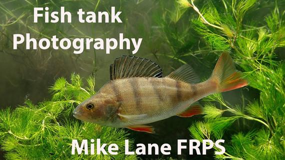 Fish Tank Photography