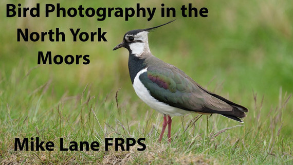 Bird Photography in the North York Moors National Park