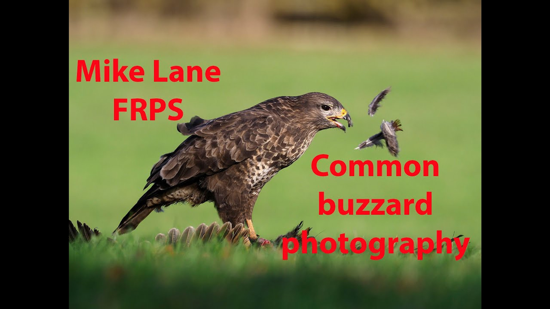 Photographing Buzzards