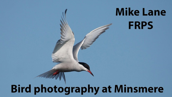 Photographing Birds at RSPB Minsmere
