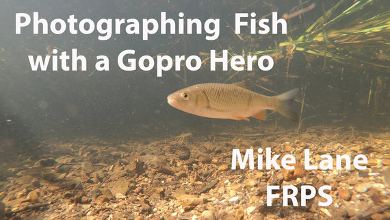 Photographing Fish with a Gopro Hero