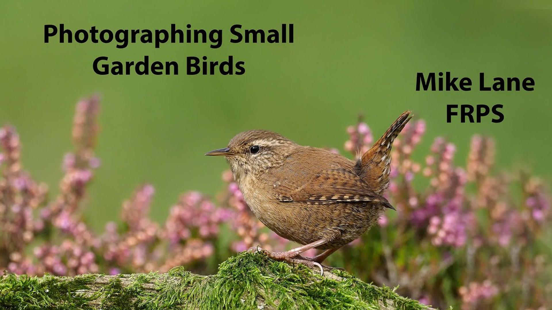 Photographing Small Garden Birds