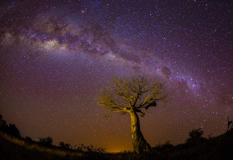 Baobab and Milky Way