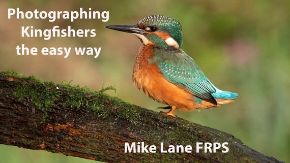 Photographing Kingfishers