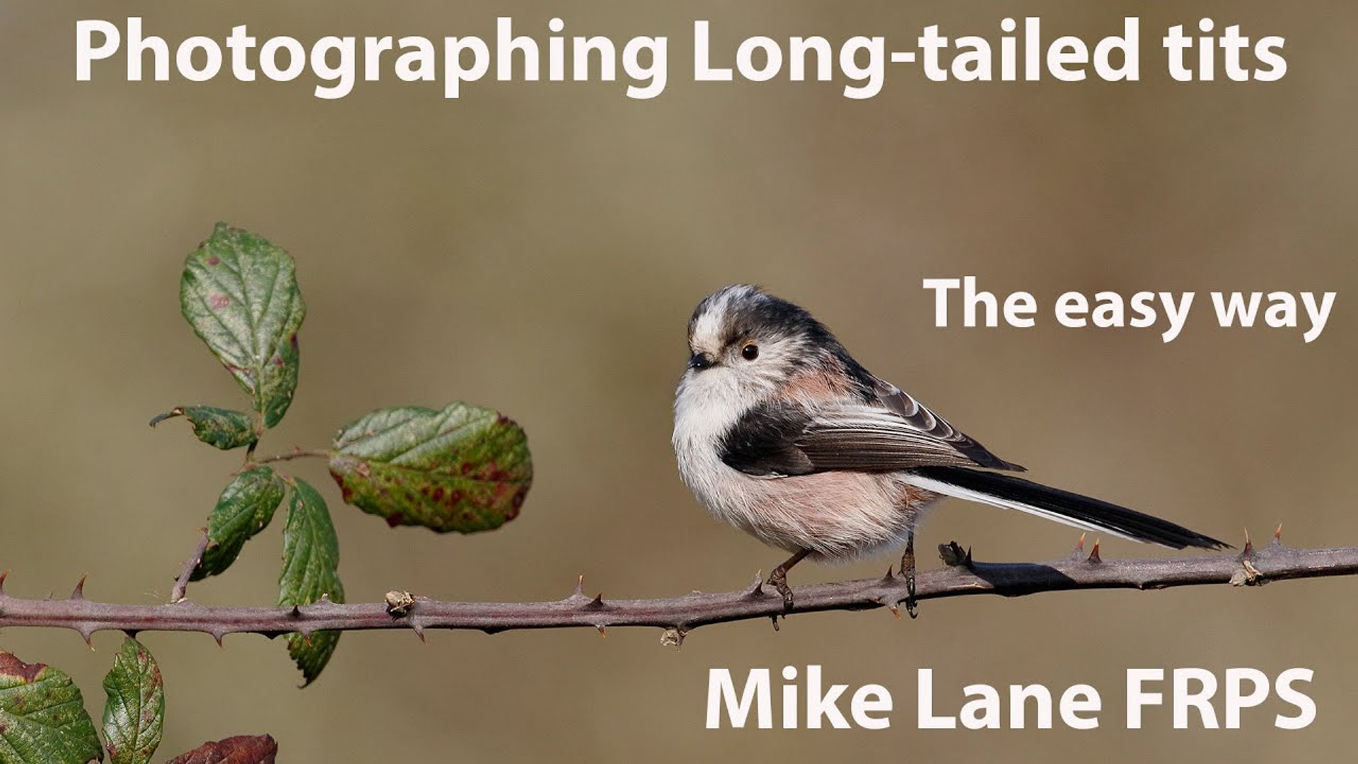 Photographing Long-tailed titis