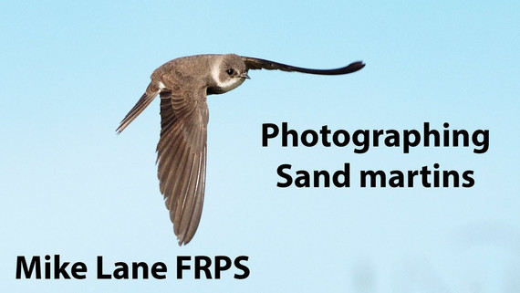 Photographing Sand martins