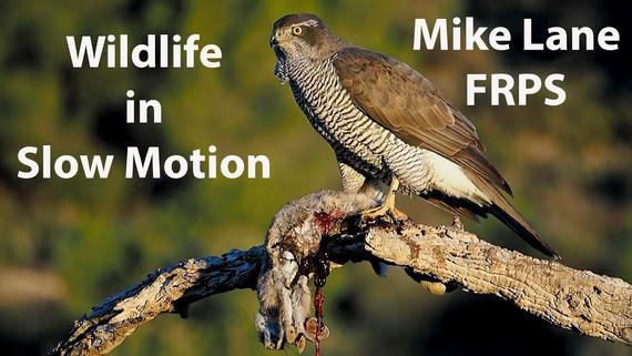 Wildlife in Slow Motion