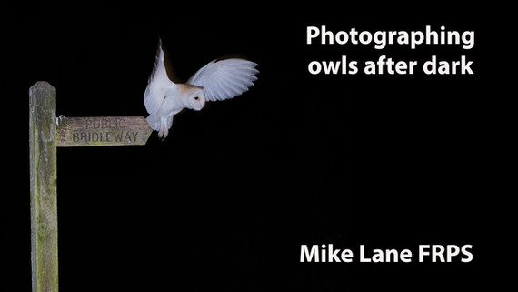 Photographing owls after dark
