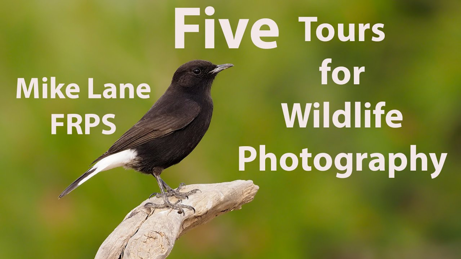 Five Tours for Wildlife Photography