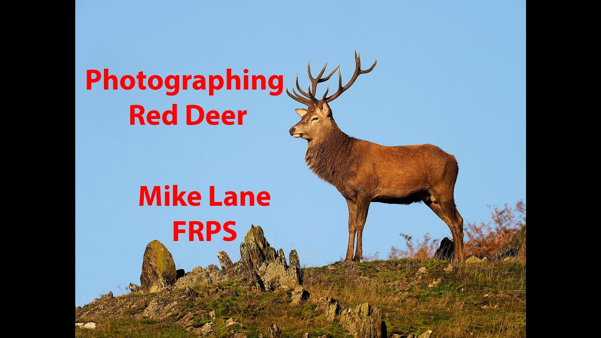 Photographing Red Deer