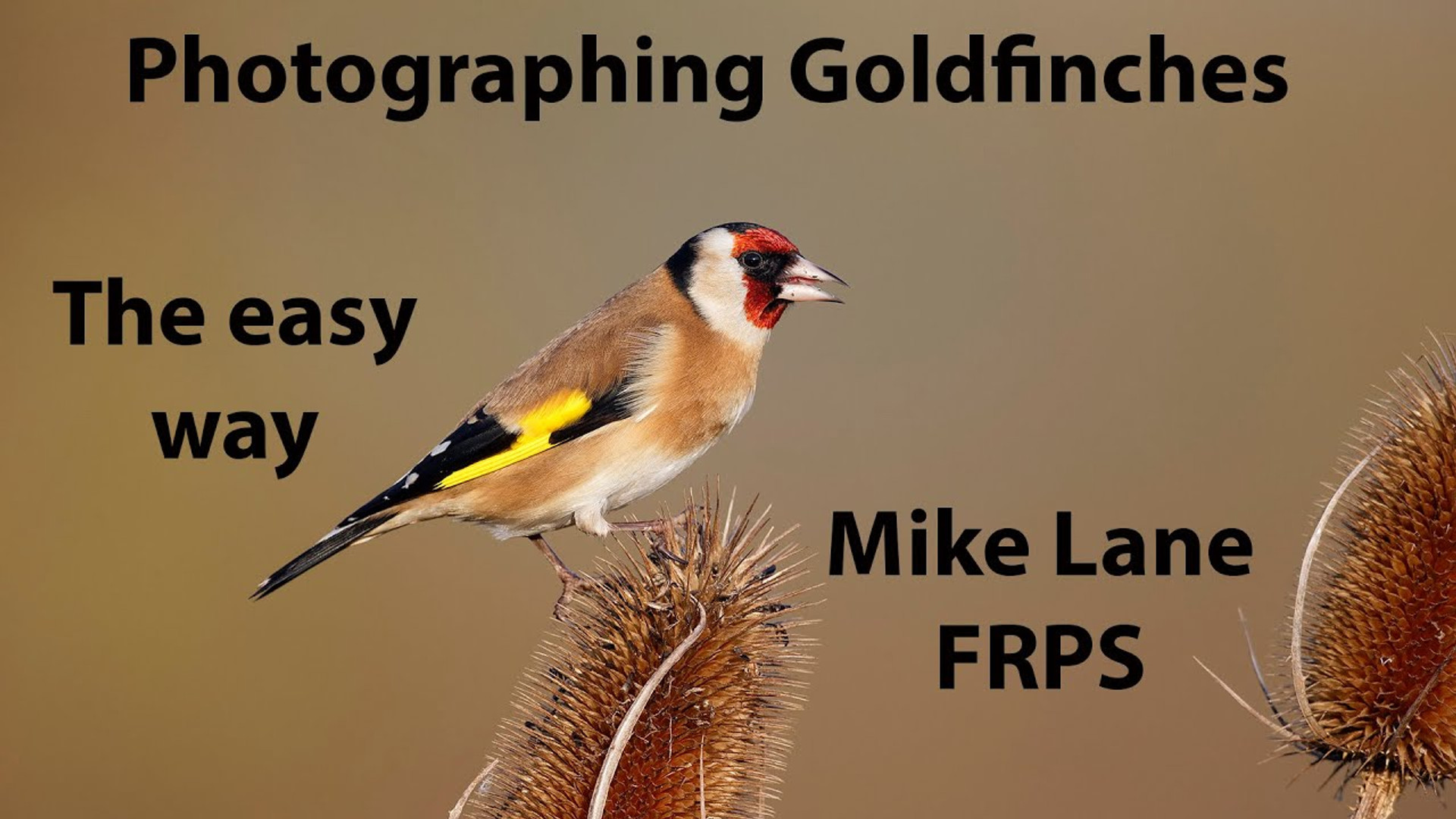 Photographing Goldfinches