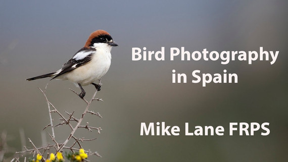 Bird Photography in Spain