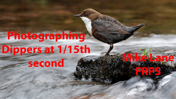 Photographing Dippers