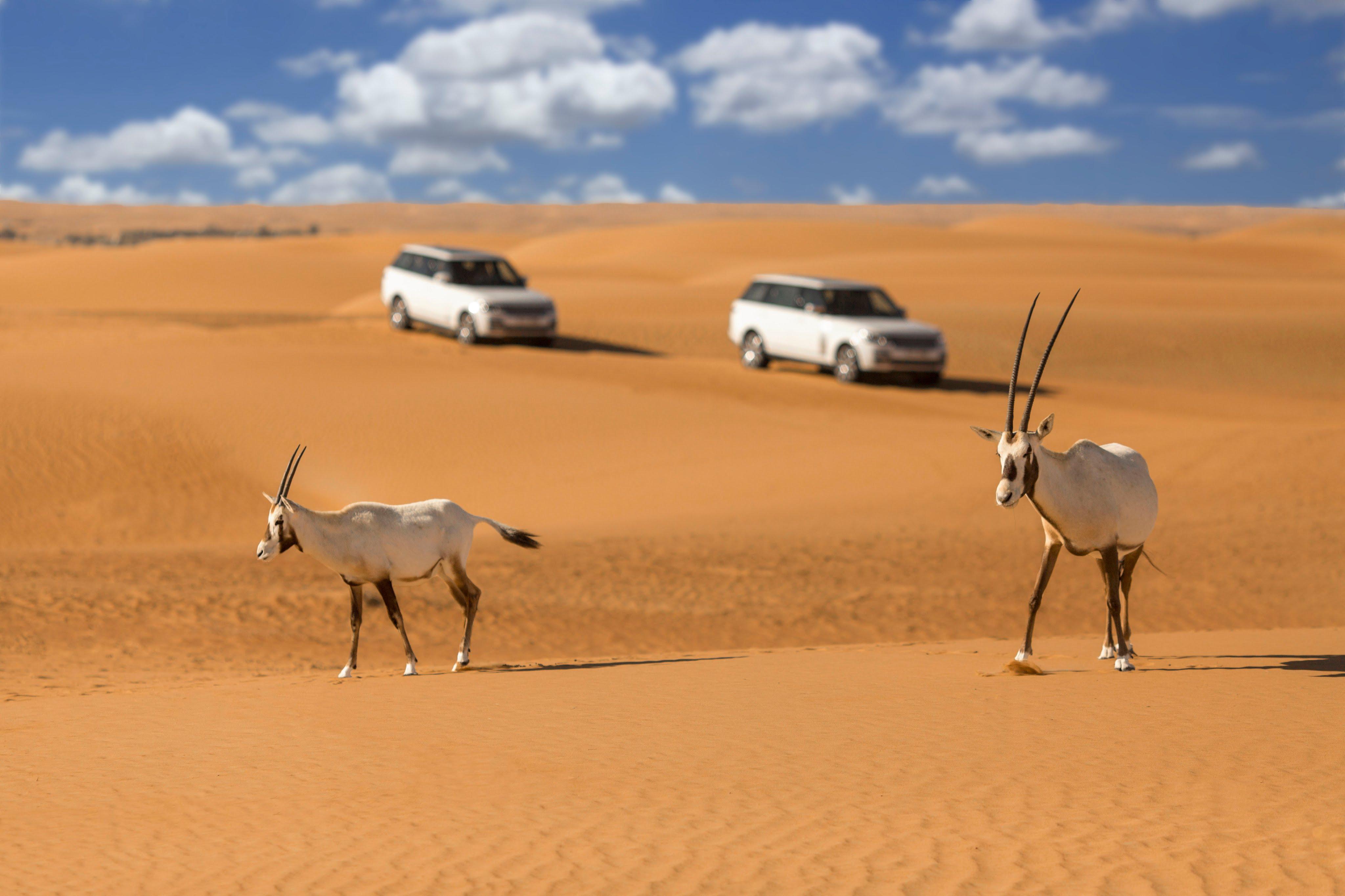 Desert Safari Tour Dubai