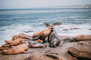 sea-lion-family-lying-on-beach-cute-ador