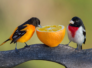 Birds feeding.png