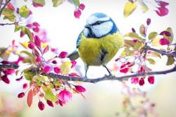 A Capella Printemps oiseau - enseigne de