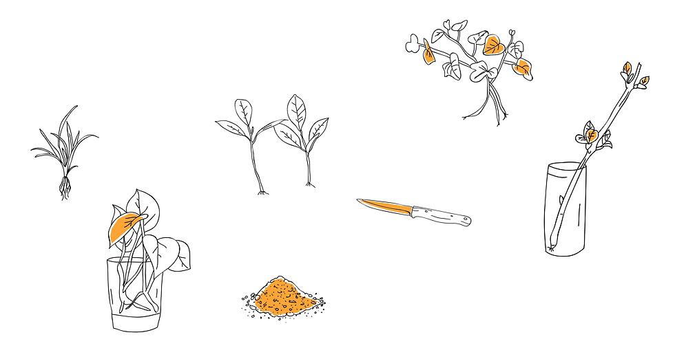Pflanzentausch & Mini-Workshop: How not to kill your plants