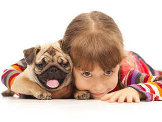 Learn with Your Dog in a Fun and Rewarding Way through Positive Dog Training in Hamilton!