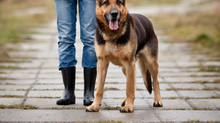 Manage Your Dog's Counter Surfing Habit with Professional Dog Training near Leesburg, VA