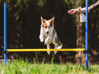 Fun Games that will Make Your Hamilton Dog Training Classes Even More Exciting!