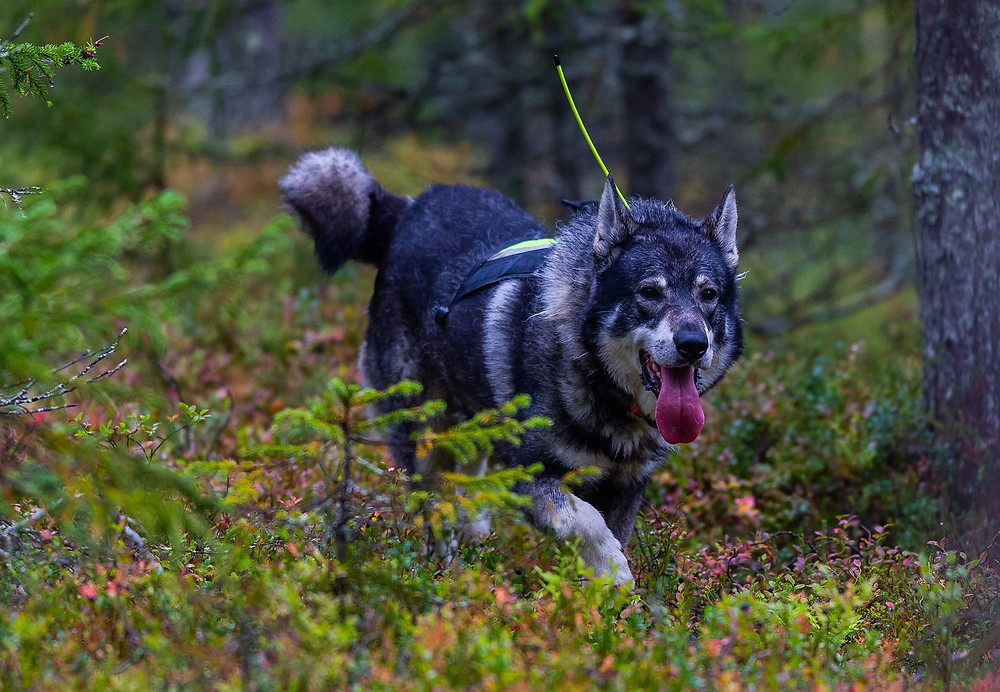 Canine's Prey Drive with Specialized