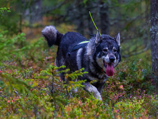 Control Your Canine's Prey Drive with Specialized Dog Training near Leesburg, VA