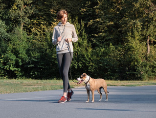 Get Ready for Fall with Dog Training Near Leesburg, VA