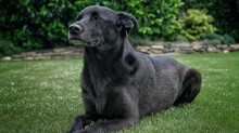 Dog Training: Four Simple Tips to Help You Better Train Adult Dogs