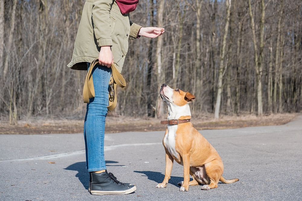 New Dog Training near Leesburg