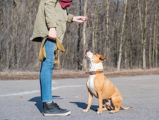 New Dog Training near Leesburg, VA: Tips for the First Week of Adoption