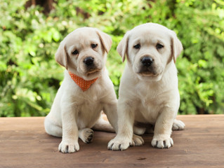 Hamilton Dog Training & Puppy Socialization Classes: Why, When, and How to Do Them Right