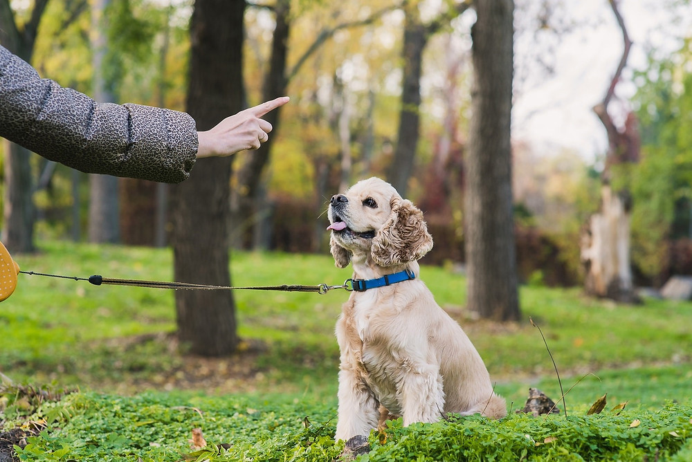 Appropriate Dog-to-Dog Play vs. Rough Play: Learning the Basics through Hamilton Dog Training Classes