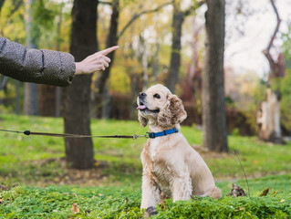 Appropriate Dog-to-Dog Play vs. Rough Play: Learning the Basics through Hamilton Dog Training Classe