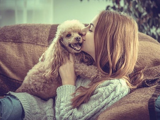 Housebound in Leesburg, VA? Here are Dog Training Tips to Ease Your Pet's Winter Boredom
