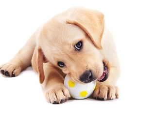 Early Dog Training: The Benefits of Training and Socializing Your Puppy Early