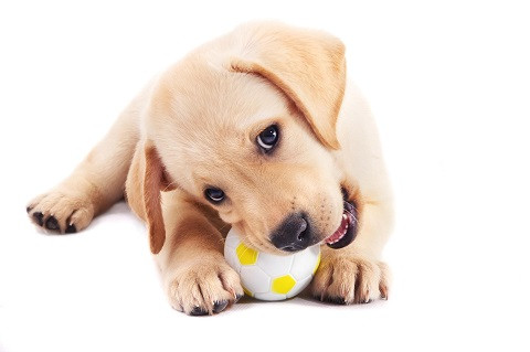 Dog Training Allows You to Enjoy Your Pup and Ensure Its Happiness