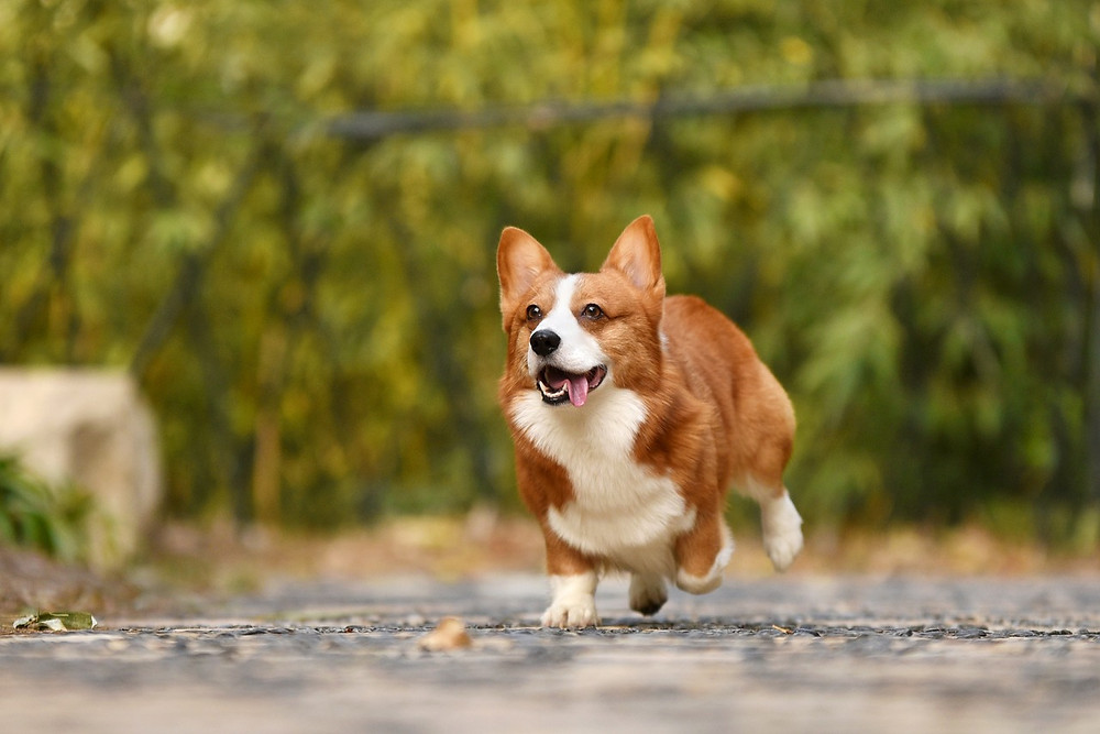 Improve Your Dog's Recall with Dog Training